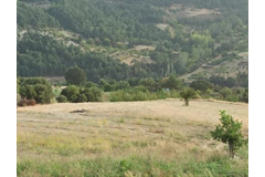 MANİSA GÖRDESDE 30.600 M2 TARLA (61.200 m2 nin 1/2 HİSSESİ)